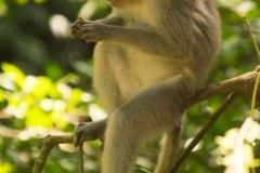 Monkey-on-a-Branch